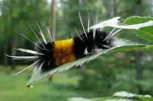 caterpillar-50686_640